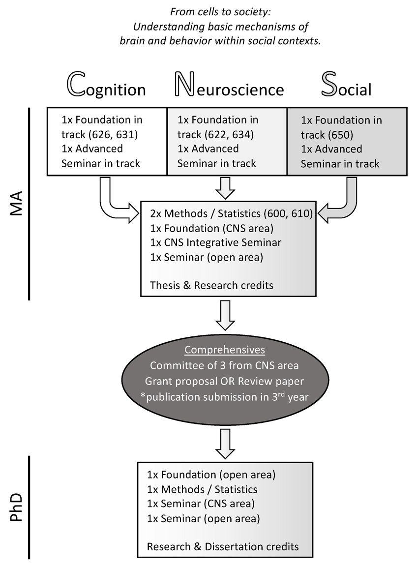 Graphical representation of the CNS curriculum.